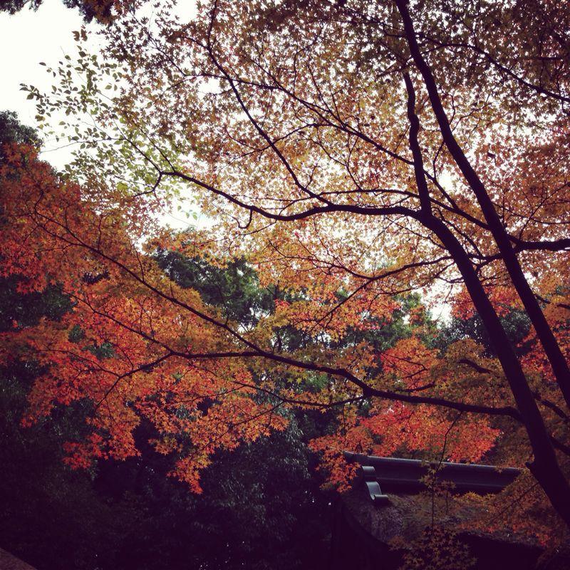 上賀茂神社の紅葉_b0277377_8305925.jpg