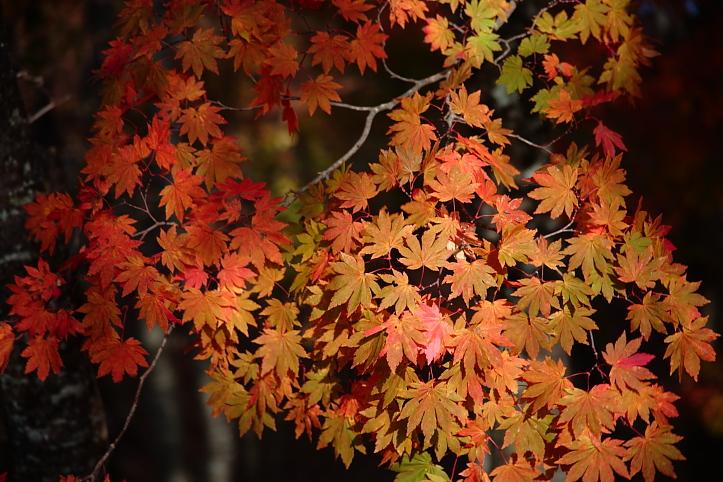 下郷町 観音沼自然公園の紅葉 その1_e0165983_9553061.jpg