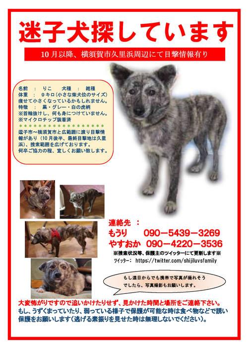迷子捜索(8/16藤沢市りこ)_f0242002_14532543.jpg