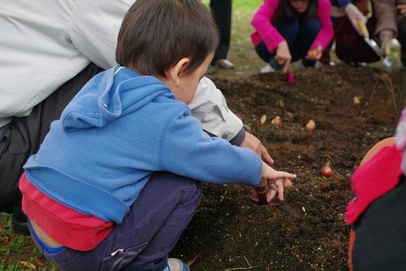 11/4「花いっぱい!!2,000球の球根を植えよう!」開催しました☆_e0235911_16254884.jpg