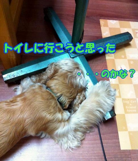 b0067012_034212.jpg