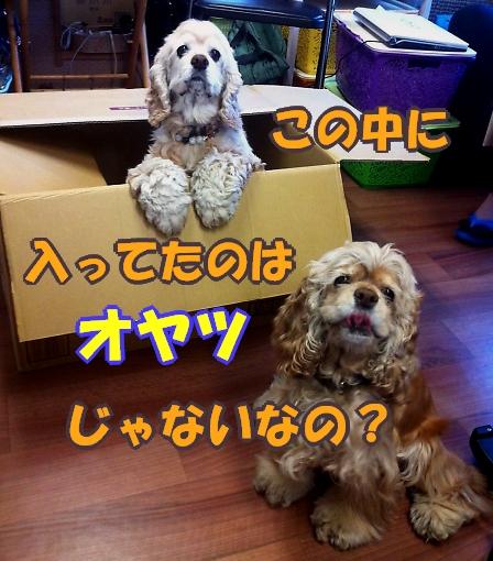 b0067012_23141185.jpg