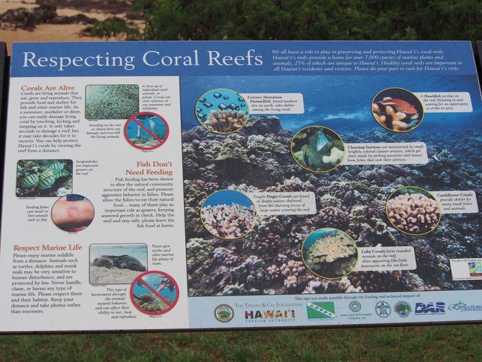 2013 10月 ハワイ(30)  カワイロアビーチ から ププケアビーチまで_f0062122_8541364.jpg