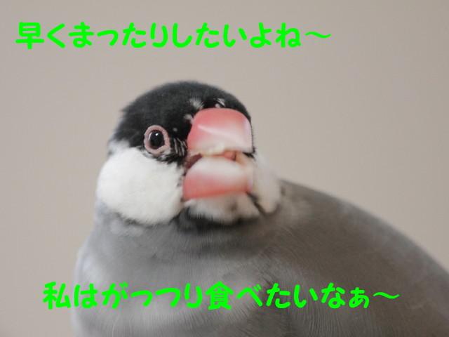 b0158061_2261349.jpg