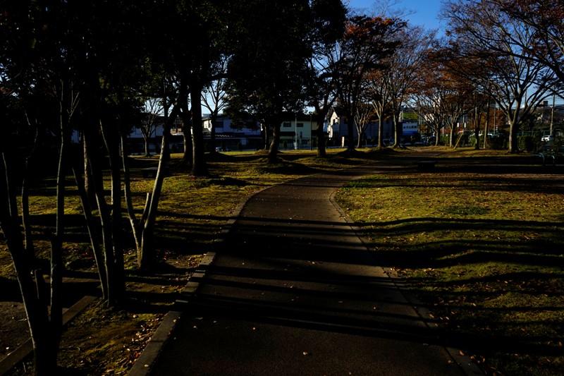 13年11月19日・運動公園_c0129671_9311053.jpg