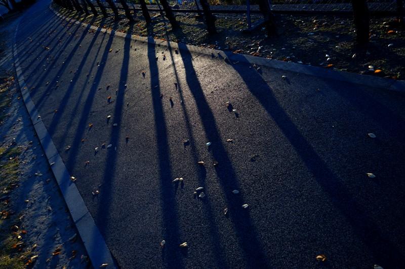 13年11月19日・運動公園_c0129671_9311166.jpg