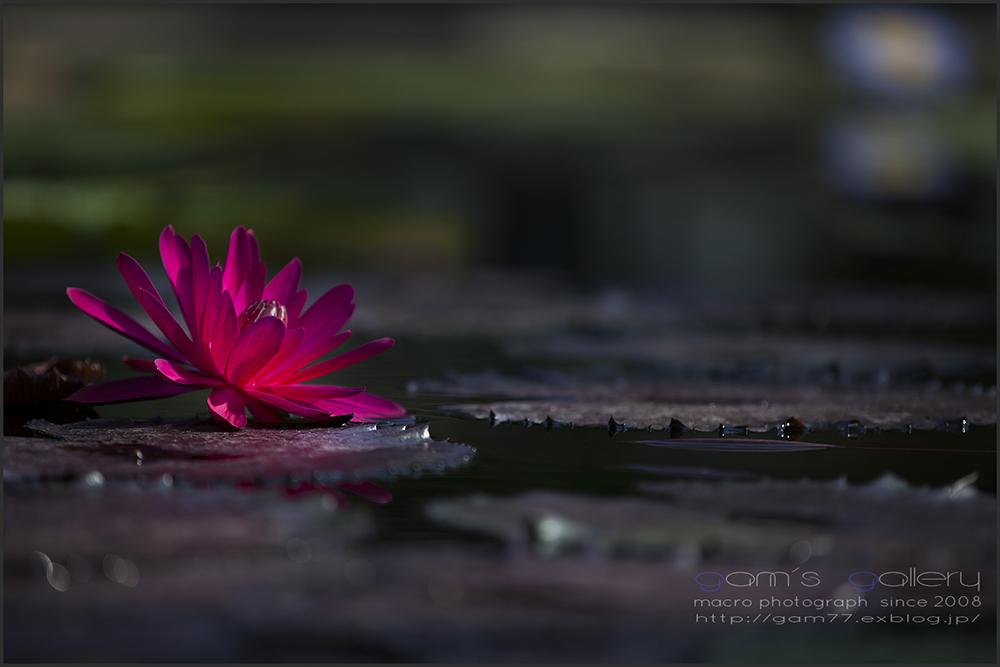 愛と慈しみのボレロ_f0195893_7504252.jpg