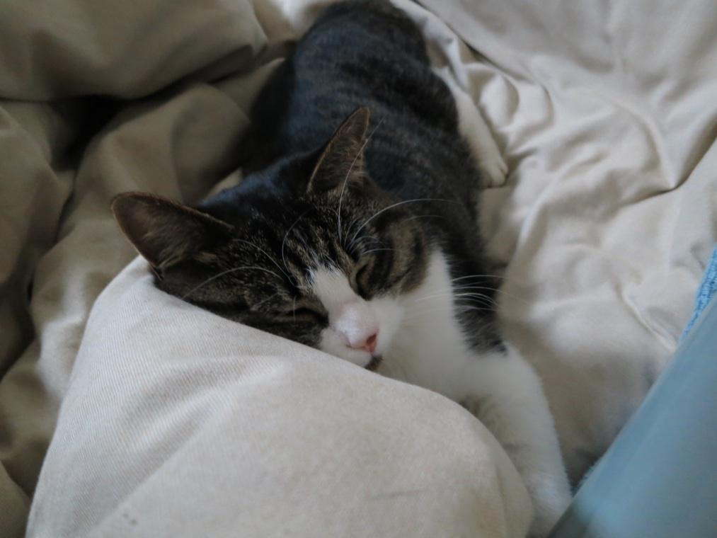 【猫】最近では_f0141609_01017.jpg