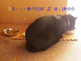 b0200310_18493190.jpg
