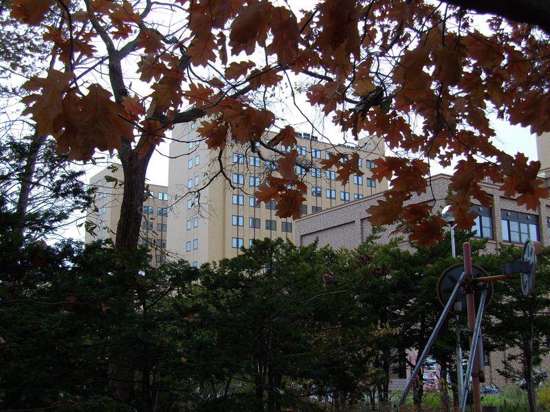 急速に色を失う札幌の街_c0025115_1931938.jpg