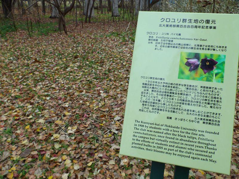 急速に色を失う札幌の街_c0025115_193534.jpg