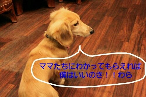 b0130018_16585070.jpg