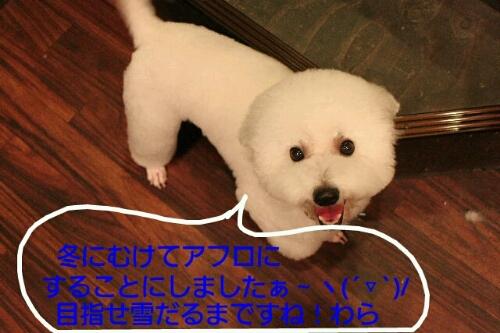 b0130018_17221233.jpg