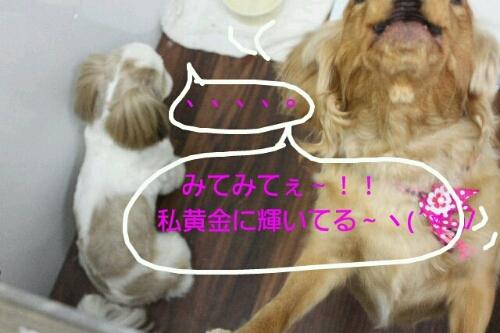 b0130018_173394.jpg