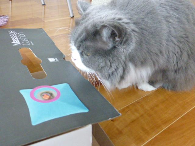 ダンボール猫の登場_e0237625_18303755.jpg