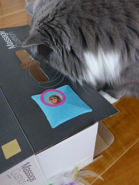 ダンボール猫の登場_e0237625_1832618.jpg