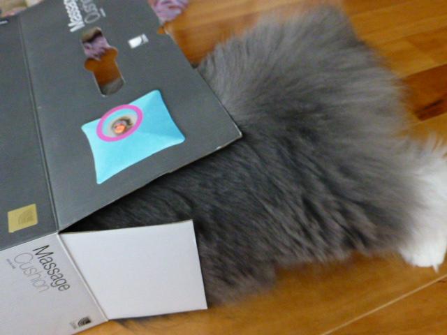 ダンボール猫の登場_e0237625_18343450.jpg