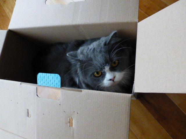 ダンボール猫の登場_e0237625_18375967.jpg