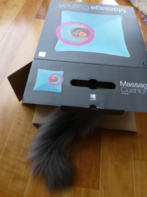 ダンボール猫の登場_e0237625_1837697.jpg