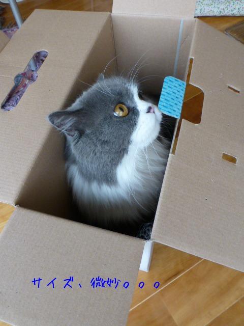 ダンボール猫の登場_e0237625_18423229.jpg