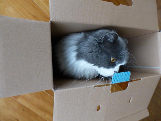 ダンボール猫の登場_e0237625_18435263.jpg