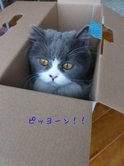 ダンボール猫の登場_e0237625_18473864.jpg