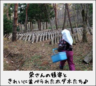 ワクワク山のお仕事なのだ♪~原木椎茸~_c0259934_14185755.jpg