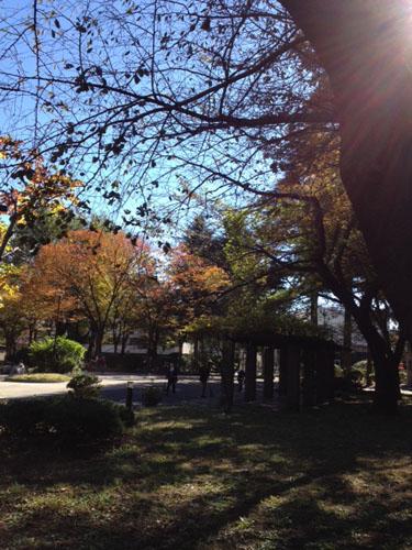 秋色     Fall colors_b0029036_10472527.jpg