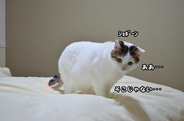 a0266372_20383748.jpg