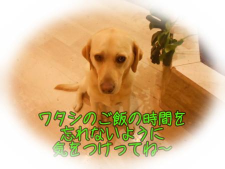 c0211876_6154733.jpg