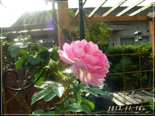 庭の様子・・・_b0096584_22343241.jpg