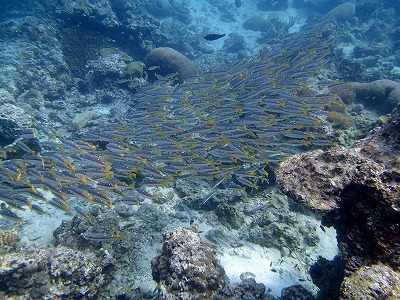 ピピ島体験ダイビング_f0144385_1031748.jpg
