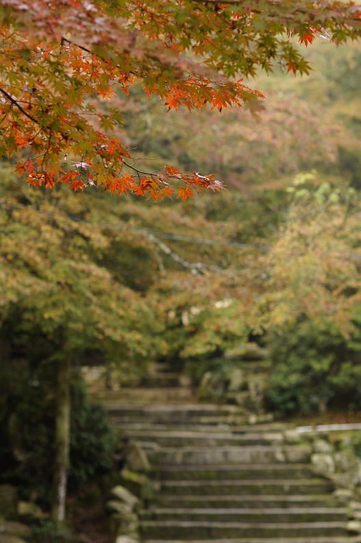 宮島の紅葉2013 その②_f0189086_1983337.jpg