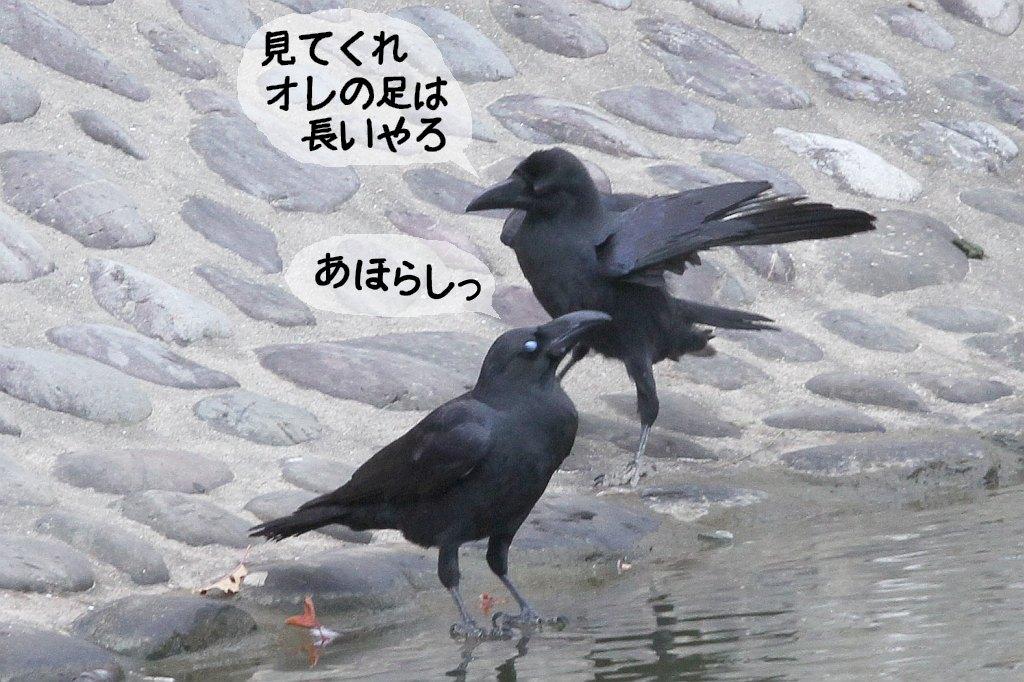 b0174191_18374376.jpg