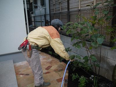 2013年 河内長野市の庭_a0233896_18482592.jpg