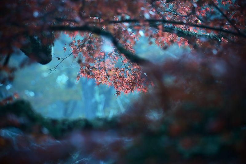 2013京都の紅葉!・神蔵寺 其の二_f0032011_1935419.jpg