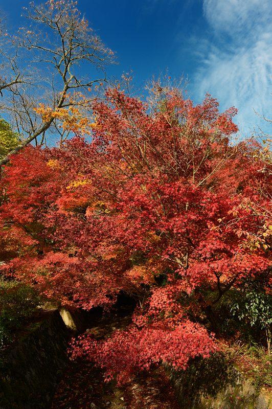 2013京都の紅葉!・神蔵寺 其の二_f0032011_19355645.jpg