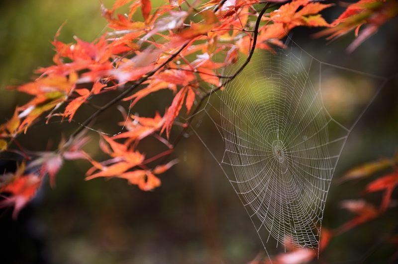 2013京都の紅葉!・神蔵寺 其の二_f0032011_19364712.jpg