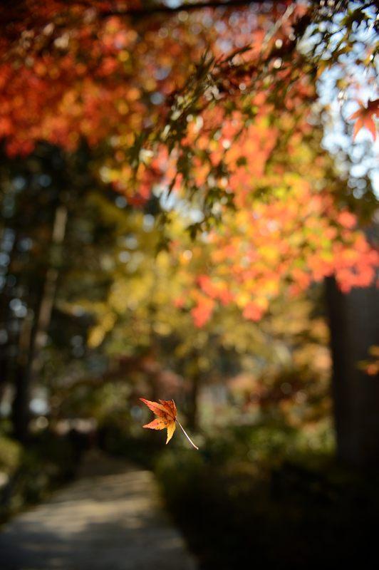 2013京都の紅葉!・神蔵寺 其の二_f0032011_19373214.jpg