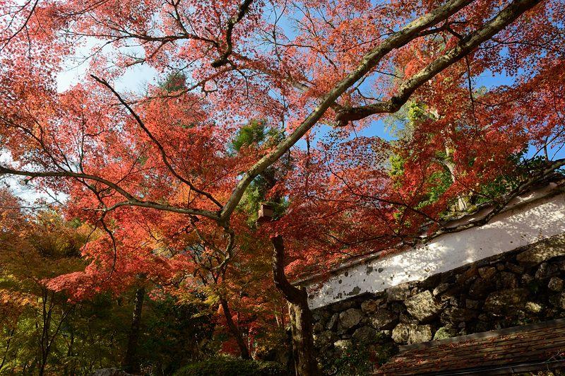 2013京都の紅葉!・神蔵寺 其の二_f0032011_19375141.jpg