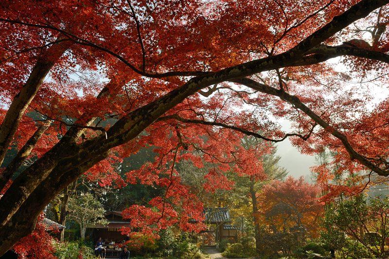 2013京都の紅葉!・神蔵寺 其の二_f0032011_19384541.jpg