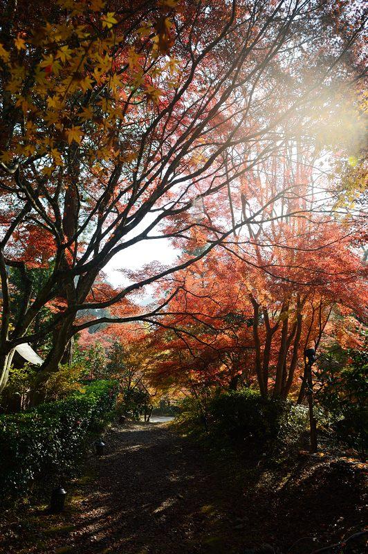 2013京都の紅葉!・神蔵寺 其の二_f0032011_1939363.jpg