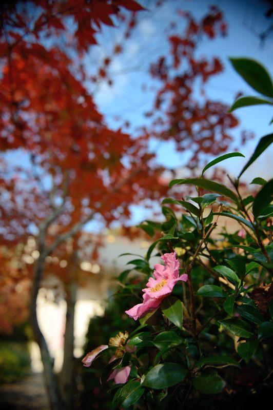 2013京都の紅葉!・神蔵寺 其の二_f0032011_19394232.jpg