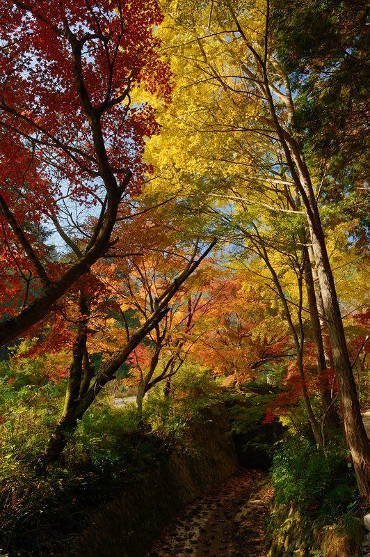 2013京都の紅葉!・神蔵寺 其の二_f0032011_1940888.jpg
