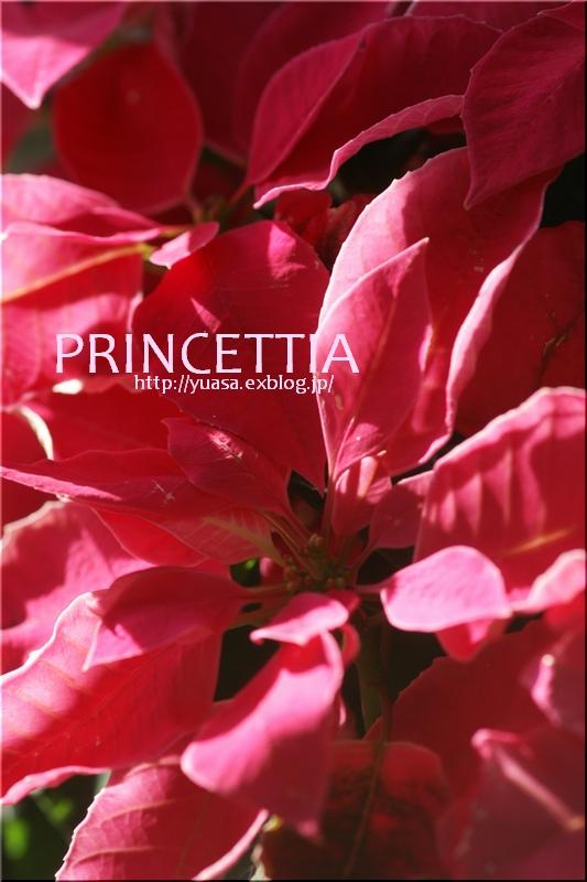 PRINCETTIA_f0156117_17331098.jpg