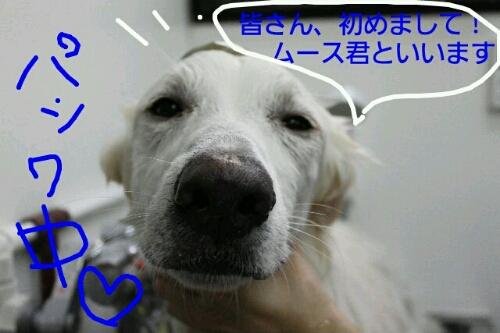 b0130018_11572893.jpg