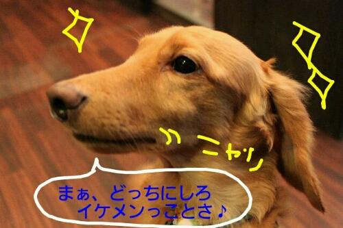 b0130018_12101080.jpg