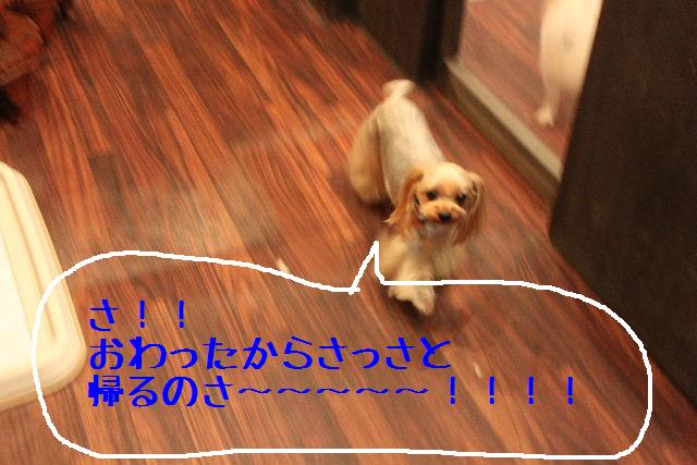 b0130018_12102423.jpg