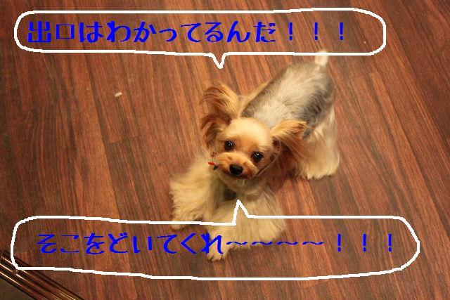 b0130018_12103199.jpg