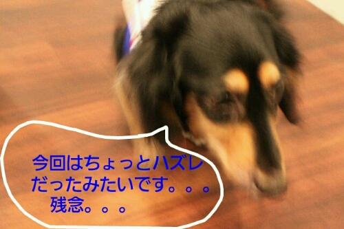 b0130018_1246983.jpg